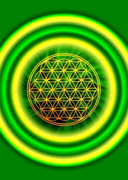 Blume des Lebens Postkarten | Motiv: grün-gelb, rund | designed by atalantes spirit®